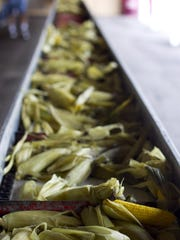 Corn waits to be eaten at the 2013 Loyal Corn Festival in Loyal.