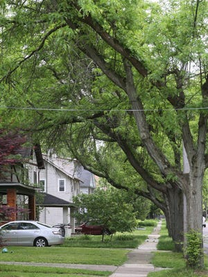 Branches from city-owned trees hang over the front porches of houses on Grand Avenue near West Exchange Street in Akron on Tuesday.