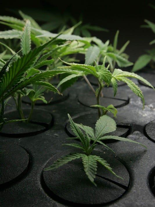 slh marijuana.jpg