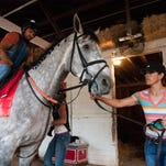 Groomer Rosa Jimenez holds Belmont Stakes contender Conquest Curlinate,  while exercise rider Marco Cano  boards the horse for a workout this week at Churchill Downs.