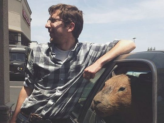 There was a time our Toyota gave a ride to a capybara, but that's another story...