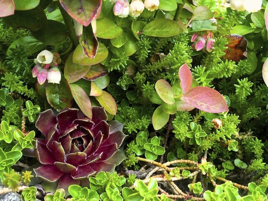 Gardening Succulents