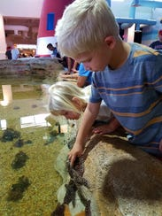 Children can get tactile with sea creatures at the