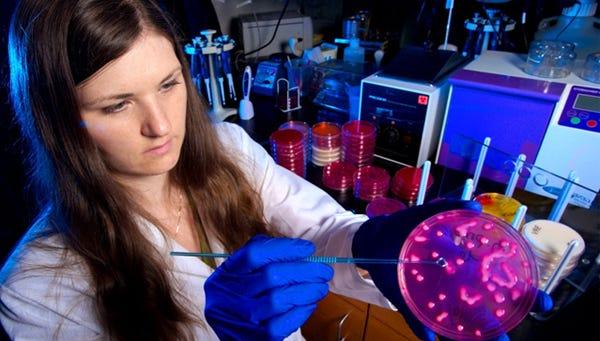 CDC microbiologist Alicia Shams demonstrates Klebsiella pneumoniae bacteria growing on a  plate.
