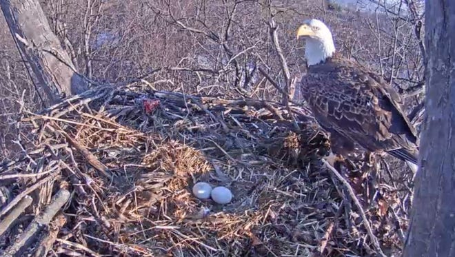 The Pennsylvania Game Commission will be re-launching their popular eagle cam in the coming weeks.