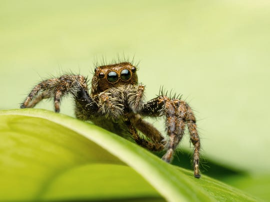 Wanting to avoid a big hairy spider is a normal fear, but some people develop a phobia of spiders that can be debilitating.