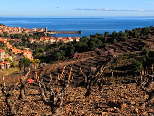 Banyuls, a fortified wine made from old vine grenache