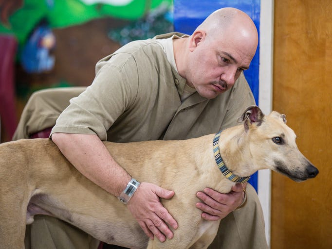 Prison Greyhounds: Inmates help dogs adjust to life off ...
