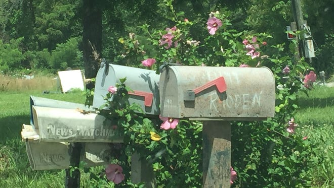 A flowering shrub blooms around the mailbox of 4199 Union Hill Road -- one of four homicide scenes of the Rhoden family.