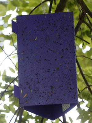 The Missouri Department of Conservation next month will take down and examine traps like this one at Sequiota Park. The hope is that the emerald ash borer, a beetle, has not appeared in the Ozarks.