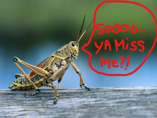 636561257330634592-edited-grasshopper.jpg