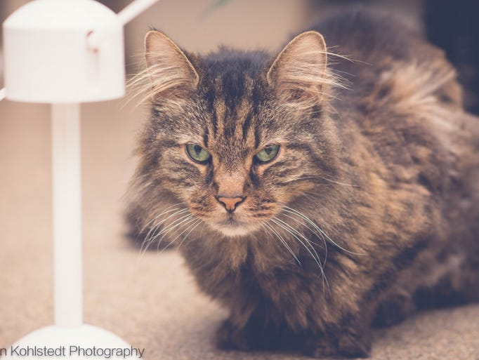 Photos: Adoptable pets for Feb. 12-18