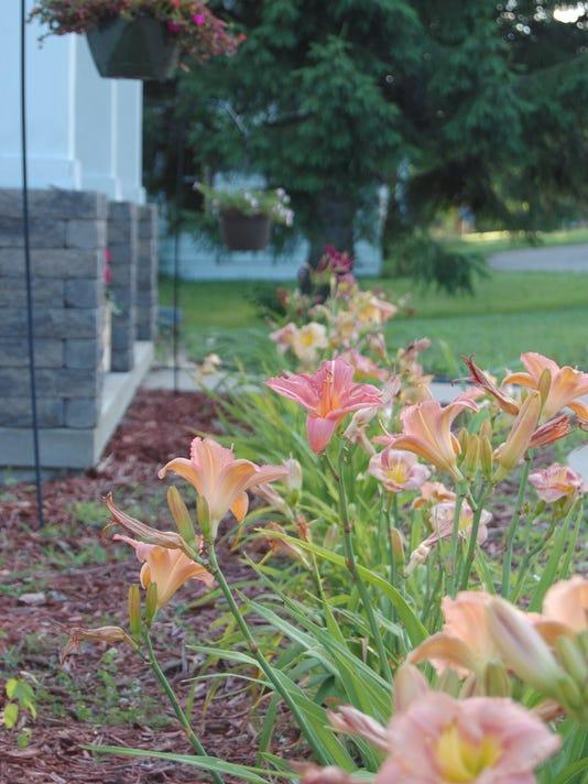 636044416859876420-07.24.16---Lily-Garden.jpg