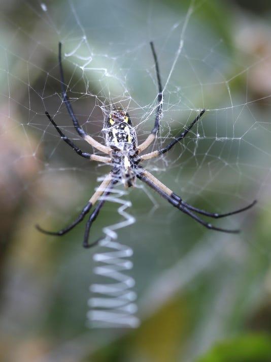APTOPIX Texas Spider Web