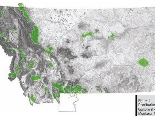 Distribution of bighorn sheep in Montana is shown in the green.