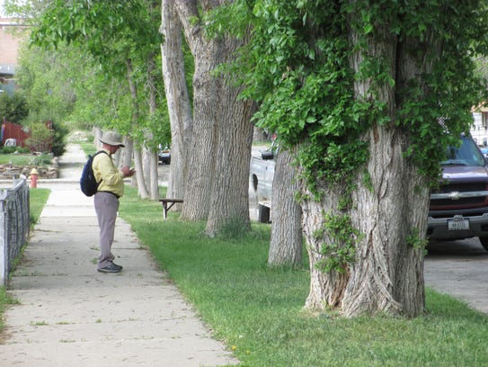 A volunteer collects information on trees during a