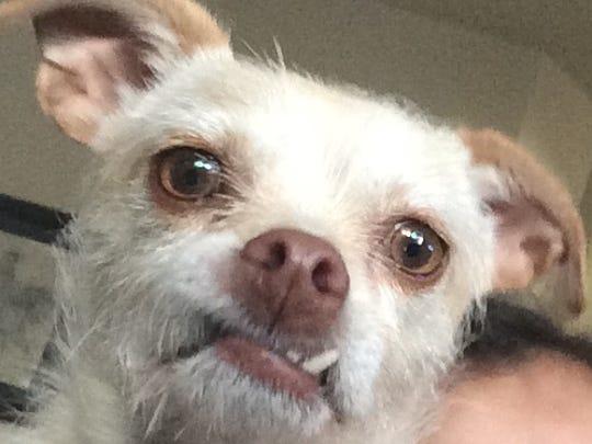 Pet Portrait: Snaggle