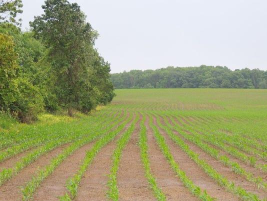 WSF-0622-crops-Rob.JPG