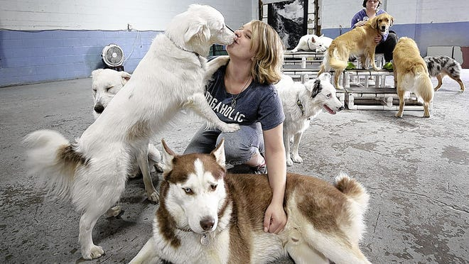 Intern Victoria Ichrist gets a kiss from Lula, an Australian shepherd, as she pets Killian, a husky, while working Aug. 19 at Pathways to Independence of Central Ohio in Worthington. The job-training business provides services for dogs, including baths, grooming, nail trimming, exercise and boarding.