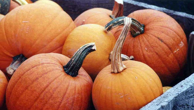 Get a free pumpkin and donate to the Willamette Humane Society during Rogue Farms Pumpkin Patch Party Oct. 17-18.
