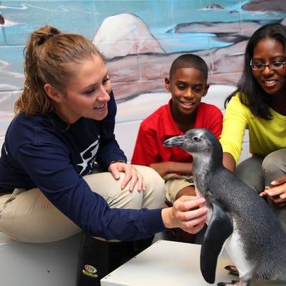 Visitors interact with a penguin at the Georgia Aquarium.