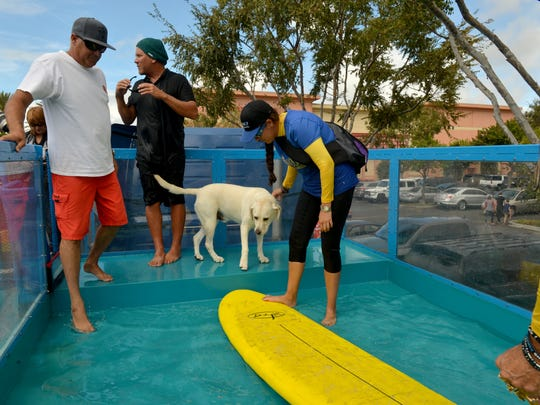 John Murphy (from left), Ron Davis, Haole, Heather Signs and her aunt Lori Signs, gather in the Lucy Pet Gnarly Crank'n K-9 Wavemaker for some dog surfing in Thousand Oaks in October.