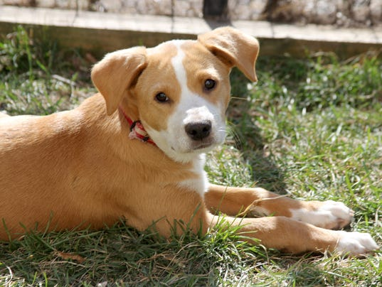 adoption dogs rescue local animal pet fall puppies harrison westchester saved vet