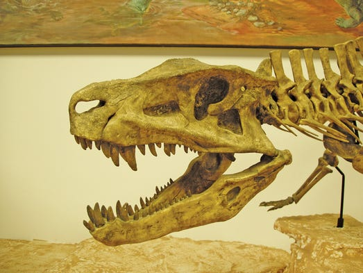 Great Places to Discover Dinosaurs and Fossils