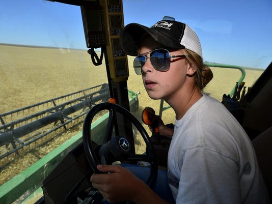 gasvoda, wheat harvest-c.jpg_20150722.jpg