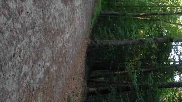 WinterPlace Park trail