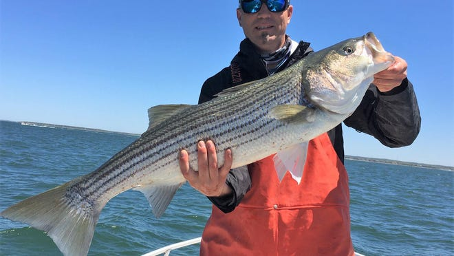 Dave Garzoli with the 39-inch striped bass he caught in Buzzard's Bay this week. The bass was released.