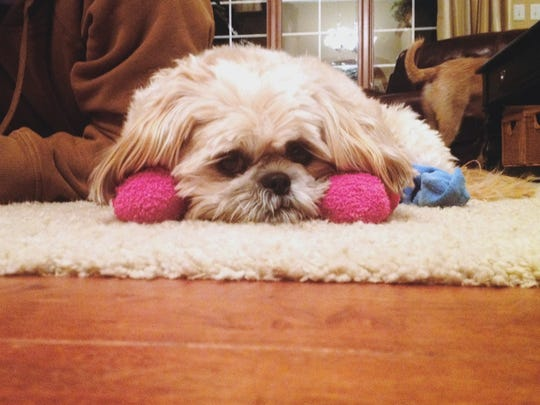 Junebug rocks pretty pink socks to help her deal with the cold weather.