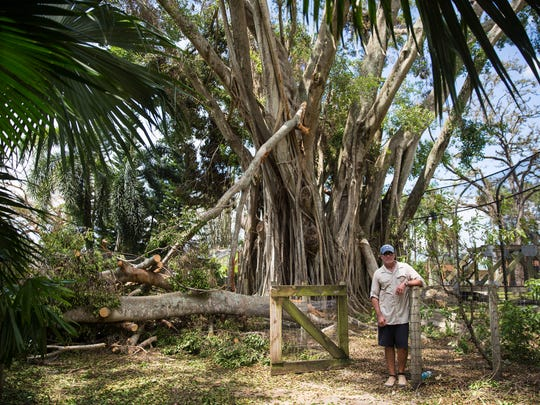 Jack Mulvena, president and CEO of the Naples Zoo, stands on Wednesday, Sept. 13, 2017, near fallen tree damage caused by Hurricane Irma.