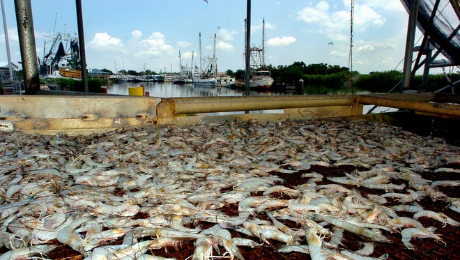 In this Advertiser file photo, shrimp move along a conveyor belt after being unloaded from a boat in Delcambre.