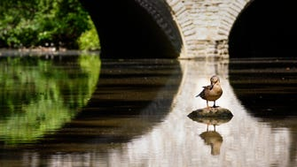 A duck rests by Stone Bridge at Buckeye Falls in Great Parks' Sharon Woods.
