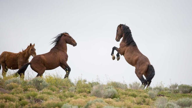 The story and photographs of wild horses in the West were among The Arizona Republic's top investigations in 2017.