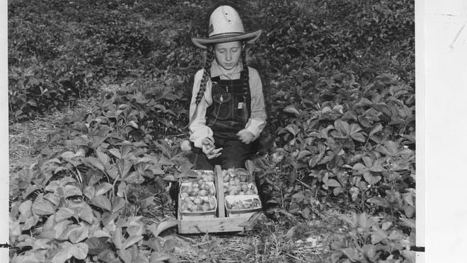 Aimee Warner, 9, helps pick strawberries on her father's McCracken County farm in western Kentucky. May 26, 1940. Courier-Journal archives