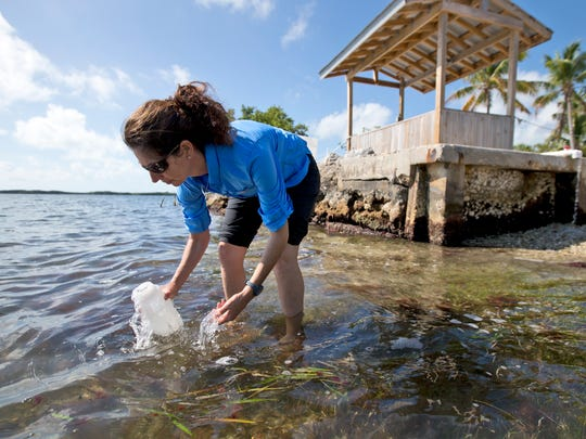 In this, Tuesday, Feb. 7, 2017 photo, Sarah Egner, director of curriculum development at Marinelab in Key Largo, Fla., takes a water sample to check for the presence of microscopic plastics in the water. Gulf Coast researchers are preparing to launch a two-year study to see what kinds of microscopic plastics can be found in the waters from south Texas to the Florida Keys. The project will expand a year's worth of data collected around the state of Florida that predominantly found microfibers, shreds of plastic even smaller than the microbeads targeted by a federal ban.