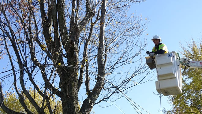An employee with Spectrum Internet yanks power lines from a tree Thursday after several lines were pulled from electric and cable poles.