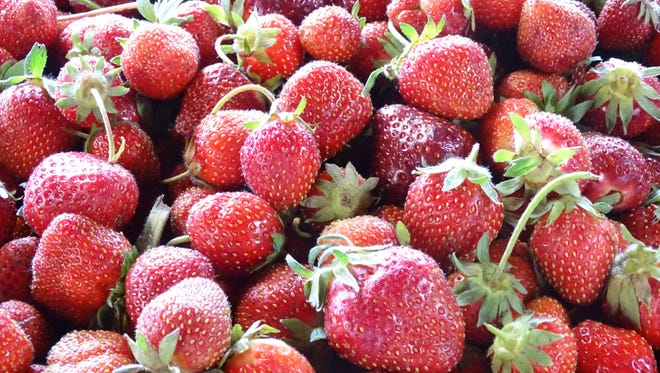 The strawberry season is underway across most of North Central Ohio.