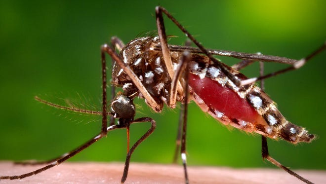 West Nile is spread by mosquitoes.
