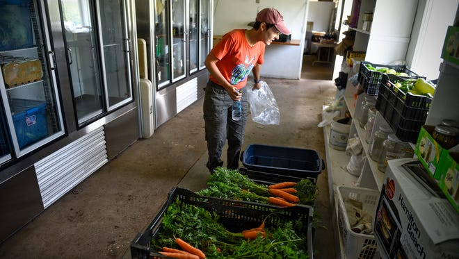 Kate Ritger views some of the fresh produce recently picked for CSA members Thursday, Aug. 24,  at the Common Ground Garden in St. Joseph.