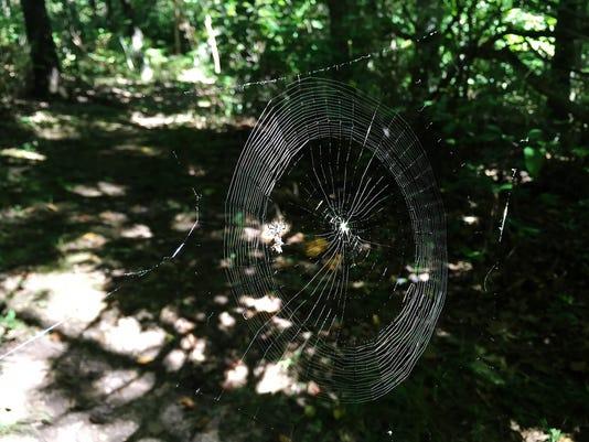 636075609871204895-spider.jpg