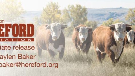 The American Hereford Association