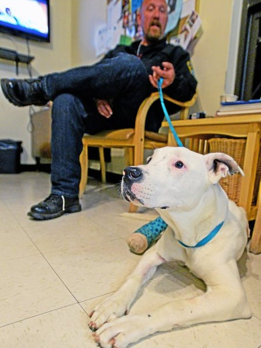 Russell Harper, aka Wolf  of Justice Rescue is one of many people who are helping Frank the dog bounce back from being shot five times in Chester.