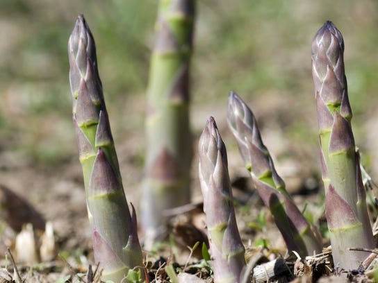 Asparagus can tolerate salty, alkaline soil and water.