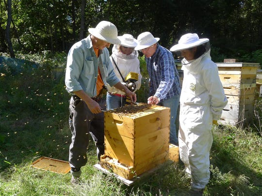 Clifford Kurz, left to right, Susan Kurz, Chris Harp and Grai Rice inspect a hive in the HoneybeeLives Apairy in New Paltz.
