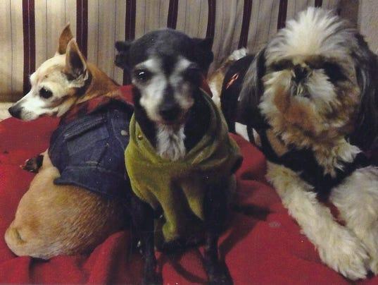 Pet Portraits: Princess, Tyra & Oskar
