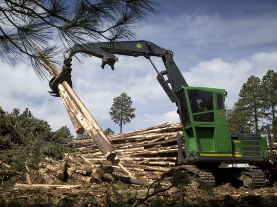 Tri Star Logging workers cut pines.