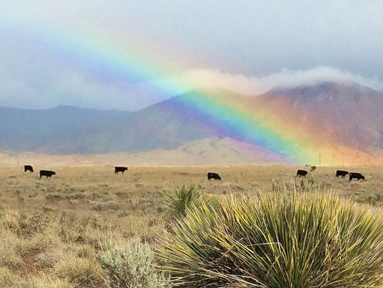 caroline-mccoy rainbow-with-cattle